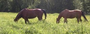 chevauxpre1.jpg