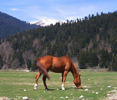 chevallacpayollepyrenees2.jpg