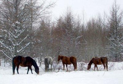 chevaux11.jpg