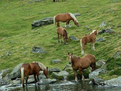 chevauxenliberte2.jpg