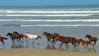 chevauxliberte.jpg