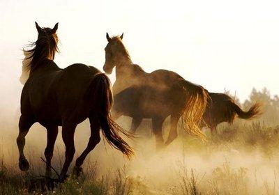chevauxliberte1.jpg